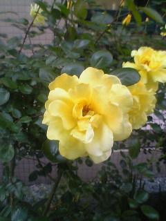 聖路加の花壇で
