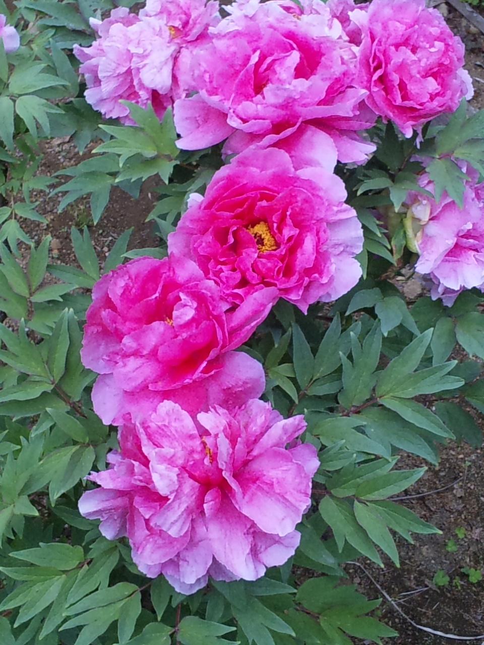 花がいっぱい(^O^)